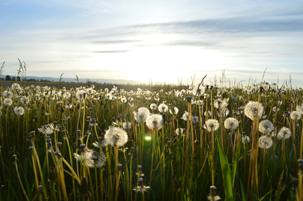 pollen allergy season